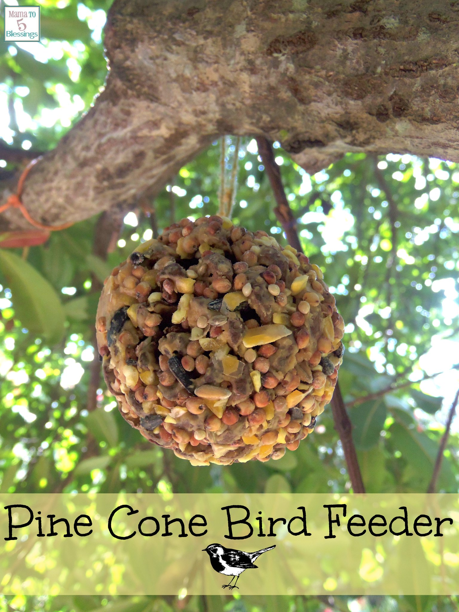 skills build to feeders diy bird ornithologist feeder a how challenges