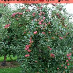 The Ultimate Apple Picking Experience At Beak & Skiff Apple Orchards