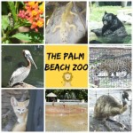 So Many Amazing Things To See & Do At The Palm Beach Zoo