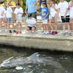 Learning Up Close At The Dolphin Research Center #FloridaTravel