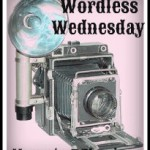 Horse Conch — Almost Wordless Wednesday With Linky