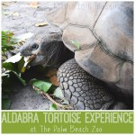 The Aldabra Tortoise Experience At The Palm Beach Zoo #FamilyTravel