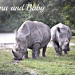 Mama & Baby Rhino (Almost) Wordless Wednesday With Linky