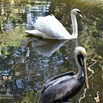 Birds Of A Feather Flock Together (Almost) Wordless Wednesday With Linky